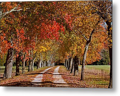 Metal Print featuring the photograph Country Lane In Autumn by Jerry Gammon