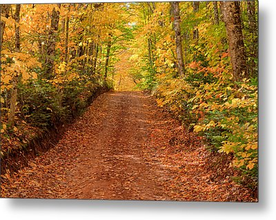 Country Lane In Autumn Metal Print by Matt Dobson