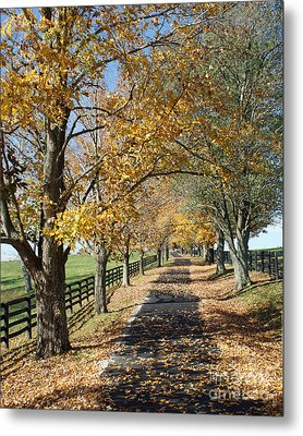 Country Lane Metal Print by Roger Potts