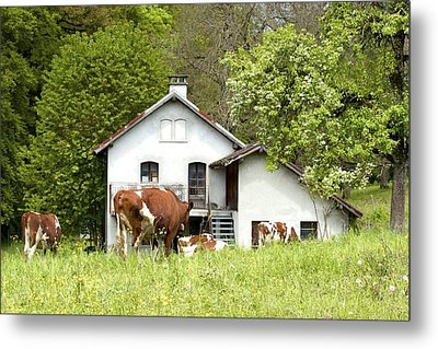 Country Living Metal Print by Colleen Williams