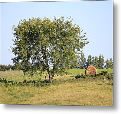 Metal Print featuring the photograph Country Scene by Penny Meyers
