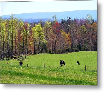 Metal Print featuring the photograph Countryside In Spring by Kathryn Meyer