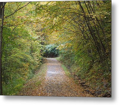 County Path Metal Print by Catherine Gagne