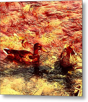Couple Of Ducks Metal Print by Jason Michael Roust