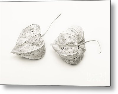 Couple Physalis Metal Print by Sviatlana Kandybovich