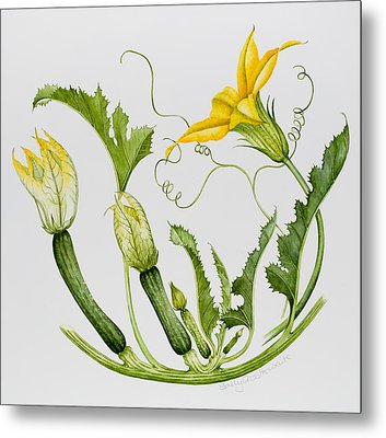 Courgettes Metal Print
