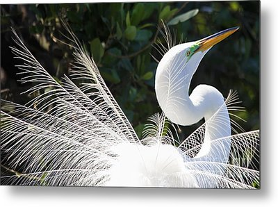 Courting Dance Metal Print by Mary Lou Chmura