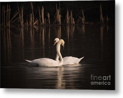 Courtship Painting Metal Print by John Edwards