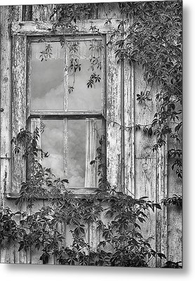 Covered In Vines - Window In Old House - Black And White Metal Print by Nikolyn McDonald
