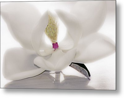 Metal Print featuring the photograph Coveted Fantasy by Janie Johnson