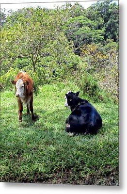 Metal Print featuring the photograph Cow 4 by Dawn Eshelman