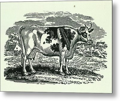 Cow Metal Print by British Library