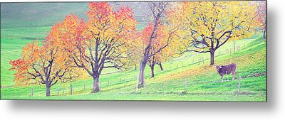 Cow Cantone Zug Switzerland Metal Print by Panoramic Images