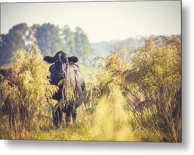 Cow Hiding In The Weeds Metal Print by Karen Broemmelsick