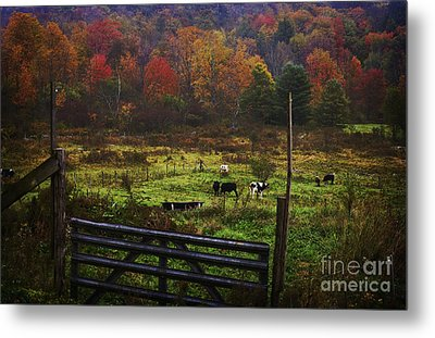 Metal Print featuring the photograph Cow Pasture In Autumn by Debra Fedchin