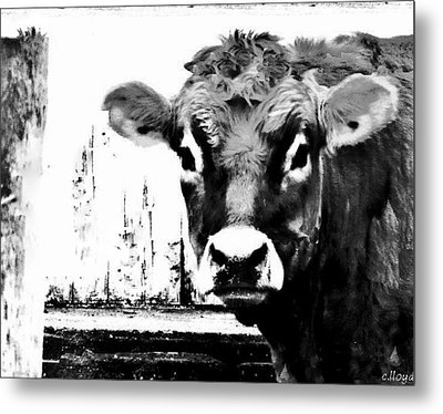 Cow  Pen And Ink Metal Print by Carol Lloyd