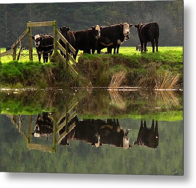 Metal Print featuring the photograph Cow Reflections by Suzy Piatt