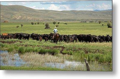 Cowboy Herding On A Cattle Ranch Metal Print