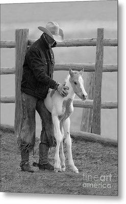 Cowboy Steadies Foal Metal Print by Carol Walker