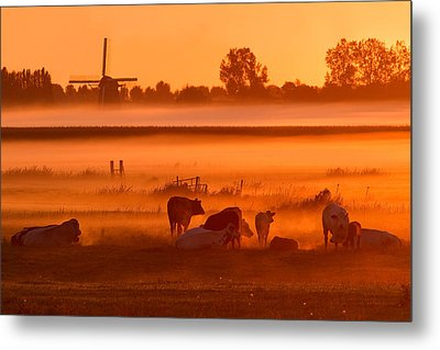 Cows In The Mist Metal Print by Roeselien Raimond