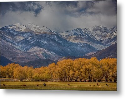 Cows Trees Mountains And Clouds Metal Print by Paul Freidlund