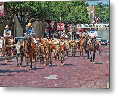 Cowtown Cattle Drive Metal Print by David and Carol Kelly