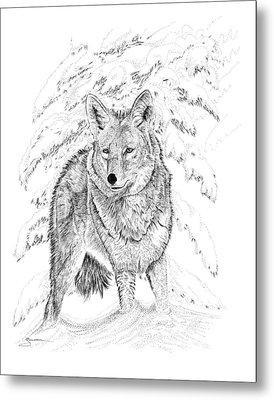 Coyote Metal Print by Carl Genovese
