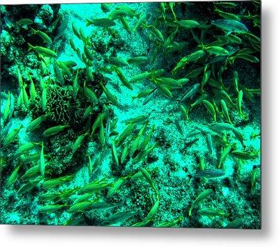 Cozumel - Grunt Fish 001 Metal Print by Lance Vaughn