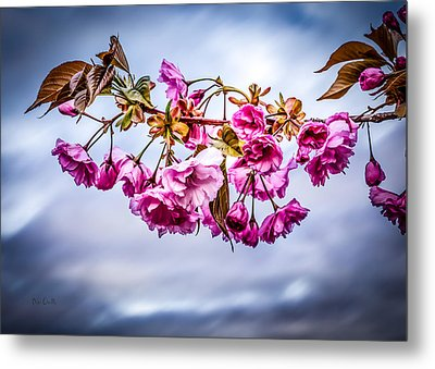 Crab Apple Tree Metal Print by Bob Orsillo