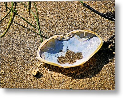 Metal Print featuring the photograph Crab Carapace by Bob Wall