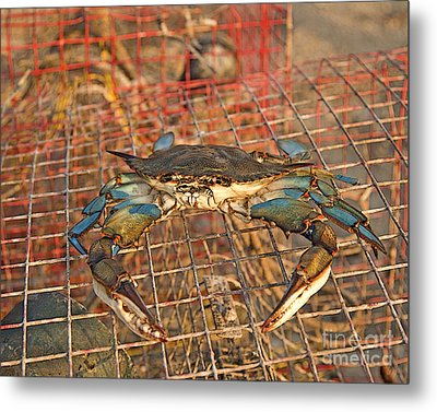 Crab Got Away Metal Print