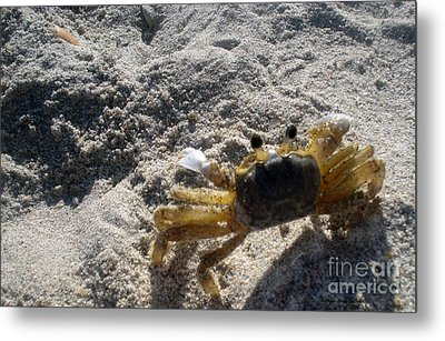 Metal Print featuring the photograph Crab On The Look-out by Megan Dirsa-DuBois