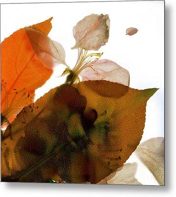 Crabapple Rose I Metal Print by Julia McLemore