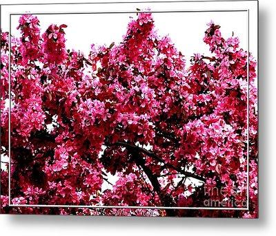 Crabapple Tree Blossoms Metal Print by Rose Santuci-Sofranko