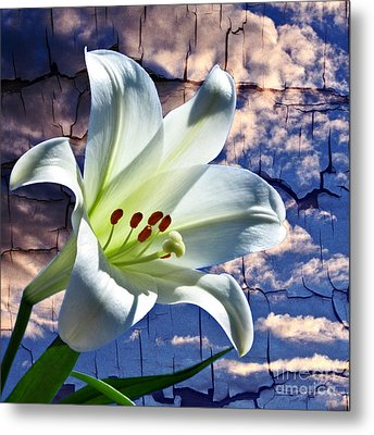 Metal Print featuring the photograph Cracked Paint Easter Lily by Marjorie Imbeau