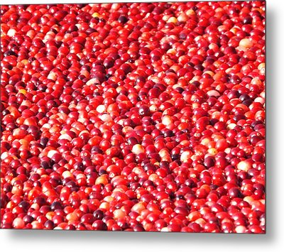 Metal Print featuring the photograph Cranberries by Jodi Terracina