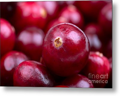 Cranberry Closeup Metal Print