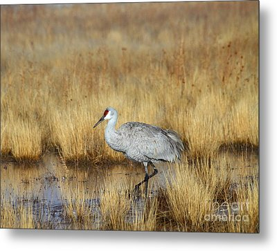 Metal Print featuring the photograph  Solitary Crane In The Field by Ruth Jolly