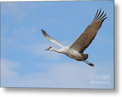 Metal Print featuring the photograph Crane In The Skies by Ruth Jolly