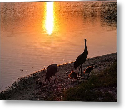Cranes At Sunset Metal Print by Zina Stromberg