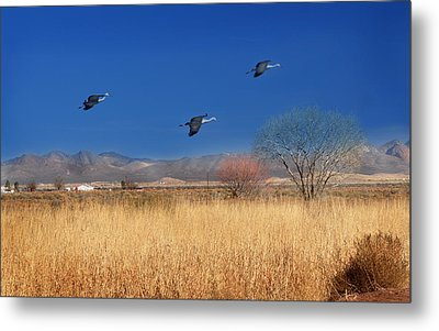 Metal Print featuring the photograph Cranes In Flight by Barbara Manis