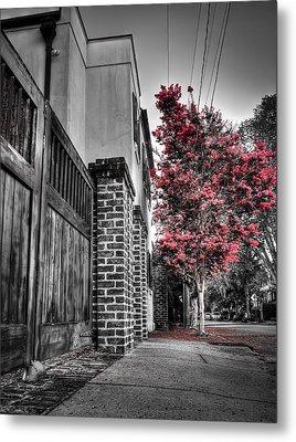Crape Myrtles In Historic Downtown Charleston 2 Metal Print