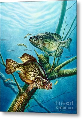 Crappie And Root Metal Print