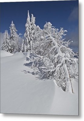Metal Print featuring the photograph Crater Lake Trees 2 by Todd Kreuter