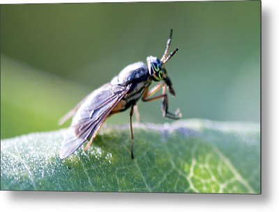Crazy-eyed Fly Metal Print