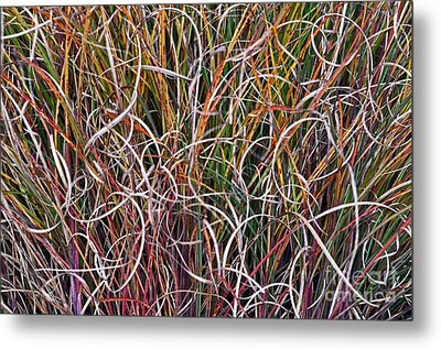 Metal Print featuring the photograph Crazy Grasses by Judy Wolinsky
