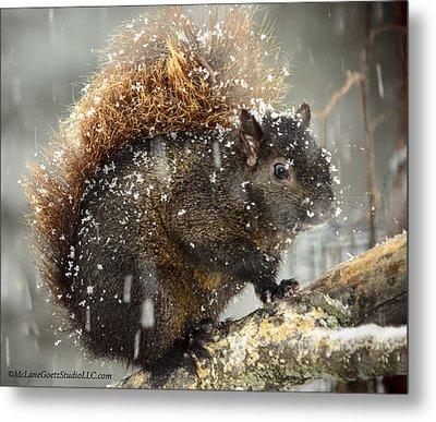 Crazy Snow Squirrel Metal Print