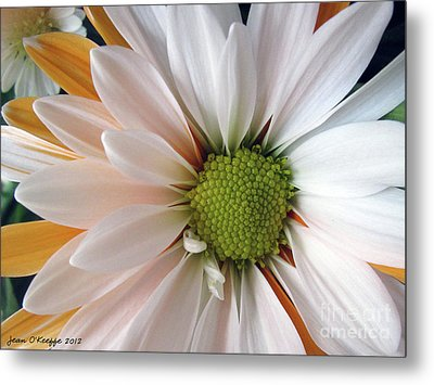 Metal Print featuring the photograph Creamsicle by Jean OKeeffe Macro Abundance Art