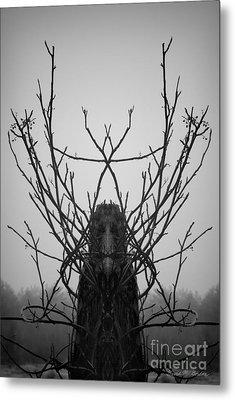 Creature Of The Wood Bw Metal Print by David Gordon