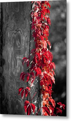 Creeper On Pole Desaturated Metal Print by Teresa Mucha